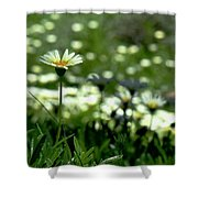Field Of White Daisies Shower Curtain