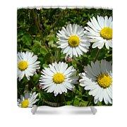 Field Of White Daisy Flowers Art Prints Summer Shower Curtain
