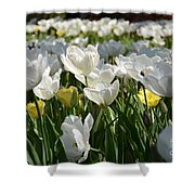 Field Of White Tulips Shower Curtain