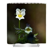Field Pansy Shower Curtain