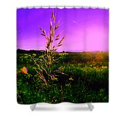 Field Rye And Ear Shower Curtain