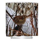 Field Sparrow Shower Curtain