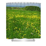 Field With Yellow Flowers Shower Curtain