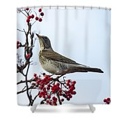 Fieldfare - 2 Shower Curtain
