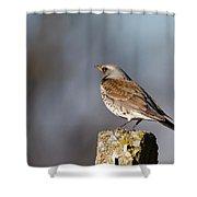 Fieldfare Watching  Shower Curtain by Cliff  Norton