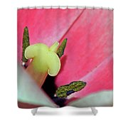 Fields Of Beauty 59 Shower Curtain