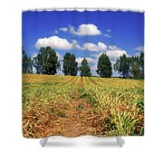 Fields Of Chopped Flowers At Nir Banim Shower Curtain