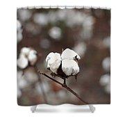 Fields Of Cotton Shower Curtain