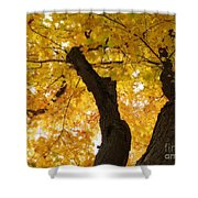 Fields Of Gold Above Our Heads Shower Curtain