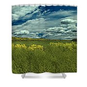 Fields Of Gold Shower Curtain