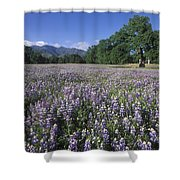 Fields Of Lupine And Owl Clover Shower Curtain