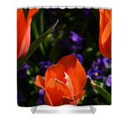 Fiery Colored Tulips Shower Curtain