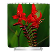 Fiery Lucifer Shower Curtain