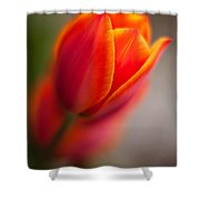 Fiery Tulip Shower Curtain