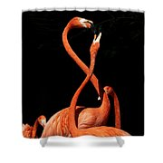 Fighting Flamingos Shower Curtain