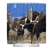Fighting Moose Shower Curtain