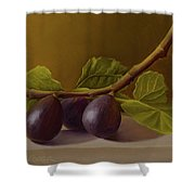 Figs From Walter's Orchard Shower Curtain