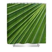 Fiji Fan Palm Shower Curtain