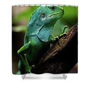 Fiji Iguana In Profile On Tree Branch Shower Curtain