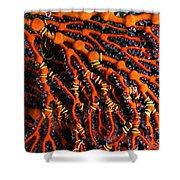 Fiji Red Seafan Shower Curtain