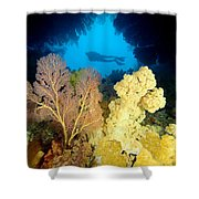 Fiji Underwater Shower Curtain