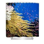 Fijian Reef Scene Shower Curtain