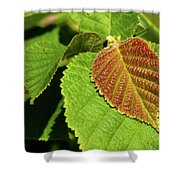 Filbert Leaf Shower Curtain