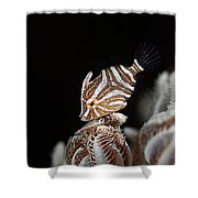 File Fish Shower Curtain