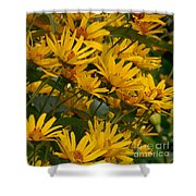Filled With Sunflowers Horizontal Shower Curtain