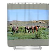 Fillies Day Out Shower Curtain