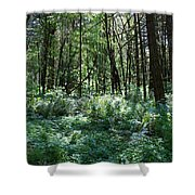 Filtered Forest Sunlight In Oregon Shower Curtain