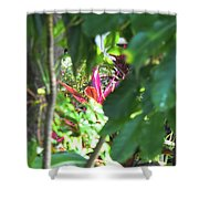Filtered Red Shower Curtain