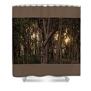 Filtered Sunlight Shower Curtain