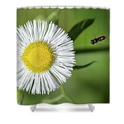 Final Approach Shower Curtain