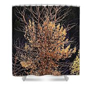 Final Fall Shower Curtain