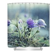 Finally Spring Shower Curtain by Priska Wettstein