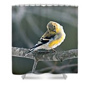 Finch Courtsy Shower Curtain