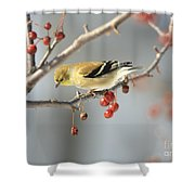 Finch Eyeing Seeds Shower Curtain