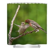 Finch Feeding Time I Shower Curtain