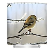 Finch On Frosty Perch Shower Curtain