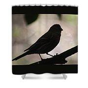 Finch Shadow 042814d Shower Curtain