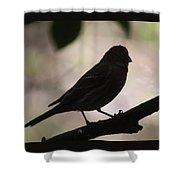 Finch Shadow 042814e Shower Curtain