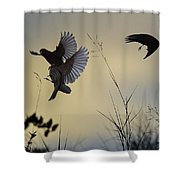 Finches Silhouette With Leaves 5 Shower Curtain