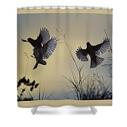 Finches Silhouette With Leaves 6 Shower Curtain