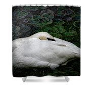 Finding Rest In Nature Shower Curtain