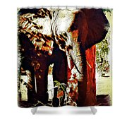 Finding Shade Shower Curtain