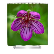 Finding Truth In Nature Shower Curtain