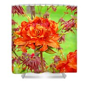 Fine Art Floral Art Prints Canvas Orange Rhodies Baslee Troutman Shower Curtain
