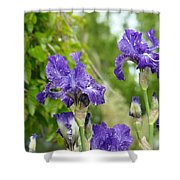 Fine Art Floral Prints Purple Iris Flowers Canvas Irises Baslee Troutman Shower Curtain