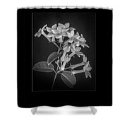Fine Art Framed Study Of Estephanotis- Shower Curtain